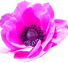 anemone4.png