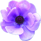 anemone_c4.png